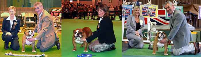 FAMOUS AM AKC CH Mystyle Warrior Ocobo Wins Trophy at Dog Show